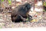 Mammals in Thailand and Cambodia 2010