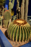 Cactii come in all Shapes