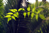 Glowing Green Leaves
