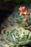 Succulent and Flower