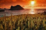 Cactus of paradise