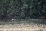 Swarming of mayflies - 2009