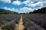 Toujours Provence ÓÀÔ¶µÄÆÕÂÞÍú˹