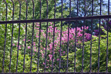 Crepe Myrtle Blossoms & Garden View