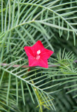Unknown & Miscellaneous Plants