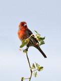Chula Vista Nature Center in San Diego