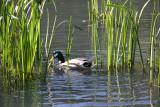 Duck & Reeds