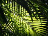 Tropical Fronds in the Conservatory