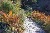 Shakespeare Garden Area - Ferns