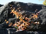 Rocks & Foliage at Hearnshead