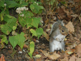 Squirrel on the West Shore of the Lake
