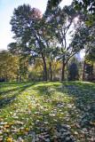 Sheep Meadow - Mostly Maple Foliage