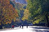 Fall Foliage - Westside Roadway