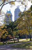 Fall Foliage - Central Park South Horizon