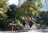 Horse Carriage Ride near Central Park South