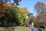 Fall Foliage - Central Park South