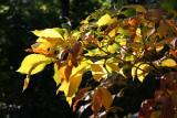 CPS Fall Foliage