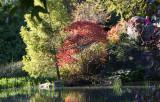 Pond View - Red Sumac Foliage