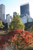 Pond View - Red Sumac Foliage & CPS Skyline