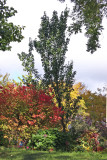 505 LaGuardia Place Gardens