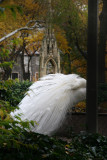 St John the Divine Cathedral Garden Peacock