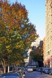 Street View - Pear Tree