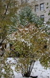 Snow of Foliage & NYU Main Building