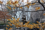 Witch Hazel at the 3 Bears Childrens Playground