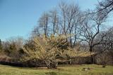 Garden View - Witch Hazel Bush