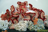 Crocheted Coral Reef - NYU Broadway Windows