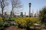 Kerria & Jersey City Skyline - Nelson A Rockefeller Park