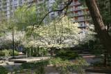 Dogwood, Crab Apple & Willow Tree