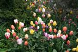 May 2008 Gardens
