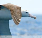 Birdlife (updated Dec 07)