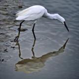 (self) reflection... ;-)