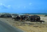 Huts along the way to Mogadishu