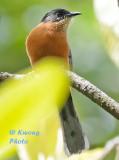 Nepal - Birds