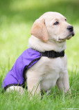 National Service Dogs