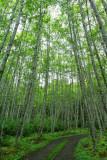 Birch Pass