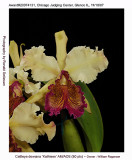20074131 - Cattley dowiana 'Kathleen' AM/AOS 80 pts.