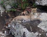 Africa - Tanzania: Serengeti, Nogorongoro