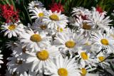 flowers cannon beach