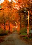 Imagine Autumn
