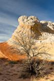 White Pocket - Lone Tree