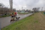 Edirne december 2009 6100.jpg