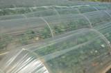Anamur mrt 2008 5253.jpg