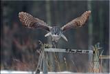 Gg-hugh-wing-span.jpg