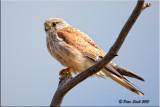 australian_birds