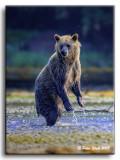 Grizz-Standing.jpg