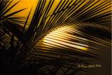 sunset backlit palm.jpg